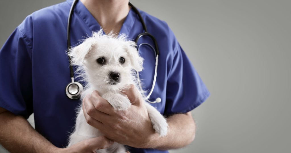 vétérinaire avec un chiot dans les bras
