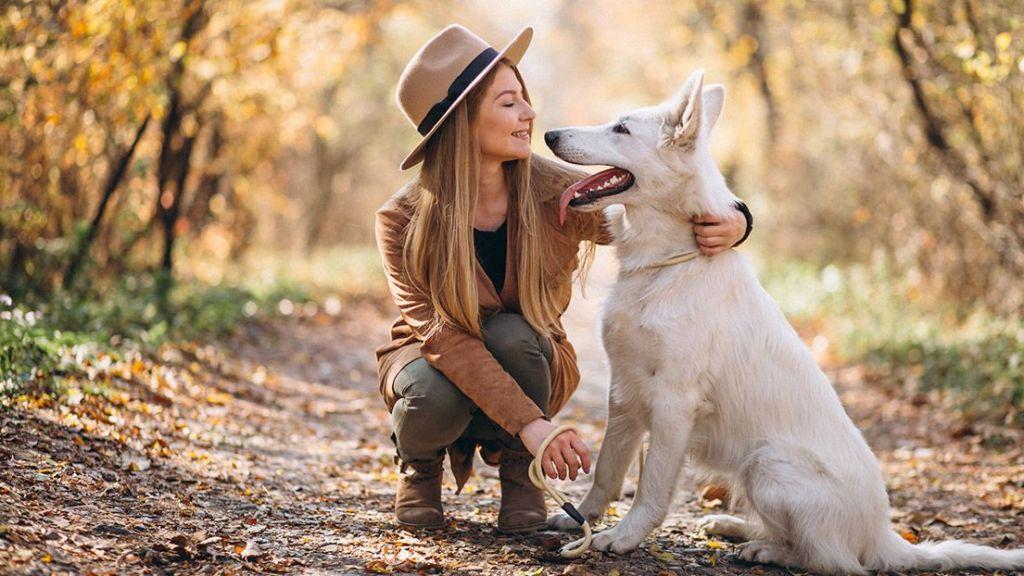 animaux-compagnie-chien