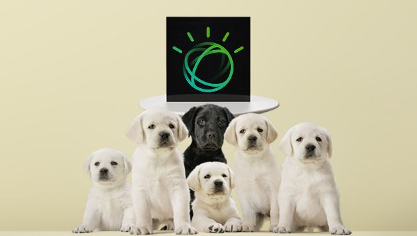 intelligence-artificielle-chiots-guides-aveugles