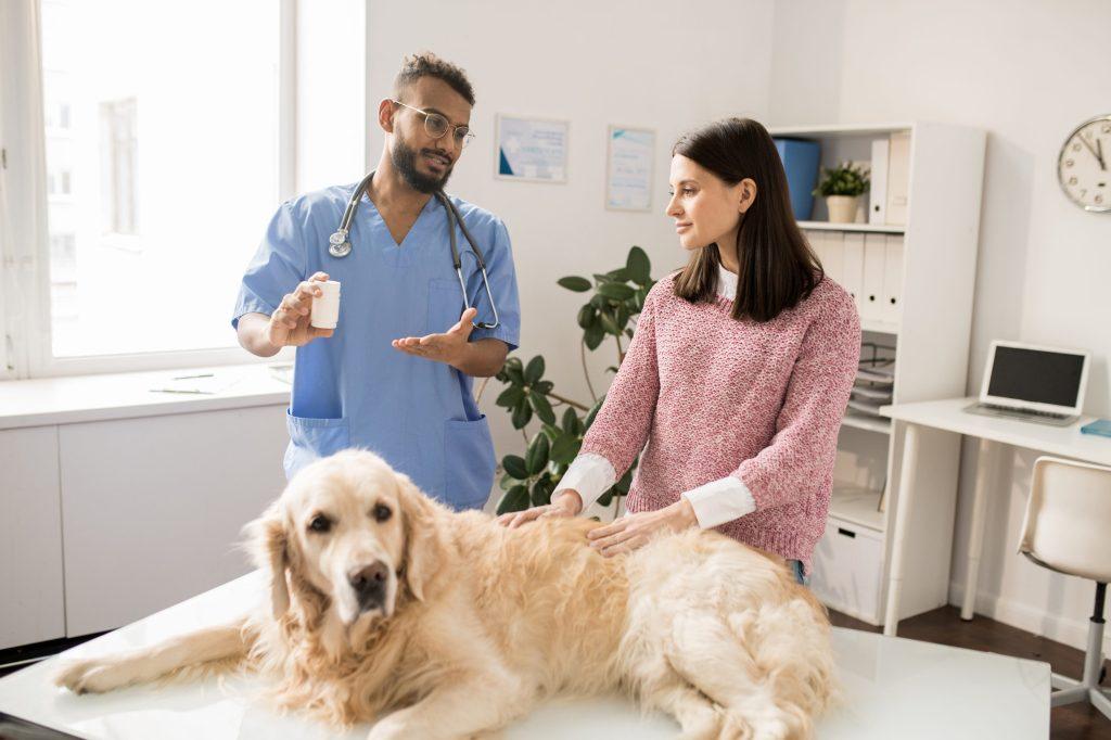 conseils client vétérinaire