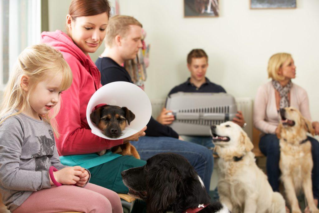 salle d'attente pleine vétérinaire